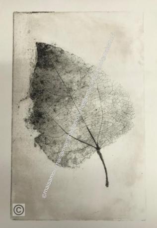 Harmaa lehti-web, Grey leaf